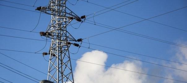 Denuncian que la Junta obstruye sancionar en caso de electrocución de aves. - Foto: Luis López Araico