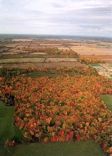 An aerial view of the beautiful fall colour of trees below