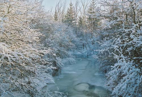 A snowy path provides adventurous residets and tourists alike rare glimpses into the natural winter splendour of Haldimand County
