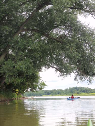 A kayaker enjoying the shade of a large tree while paddling down the Grand River