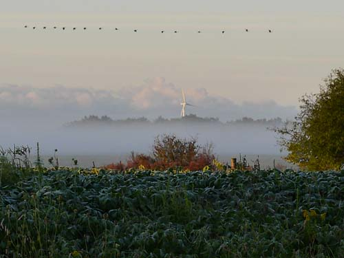 An image of a line of birds flying in front of a misty morning; a wind turbine peeking up from the fog