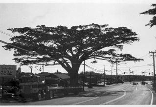 cypresstree.jpg