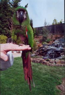 parrot1.jpg