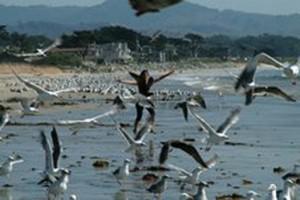birds25-300x200