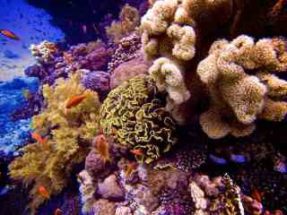 Scuba Diving The Red Sea In Photos