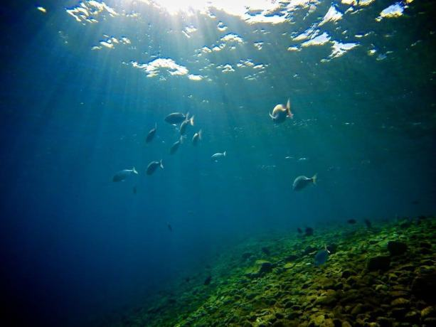 Red-Sea-Diving-Sunlight
