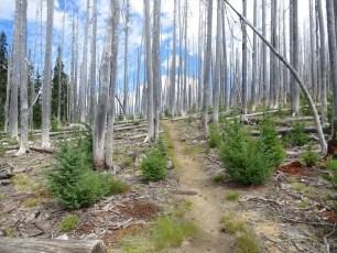 4 Burn Section Oregon