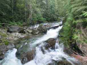Washington Creek PCT