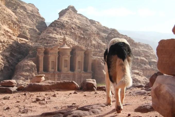 Stray Dog And Monastery Petra