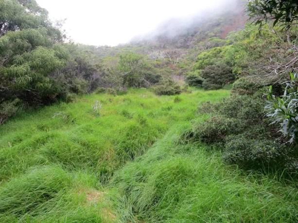 Kaupo Gap Trail Overgrown