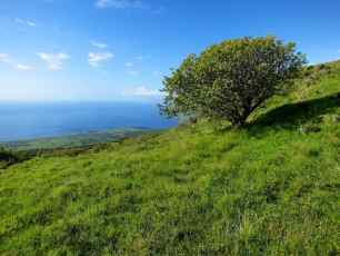 Haleakala Day 2: Up The Kaupo Gap Trail