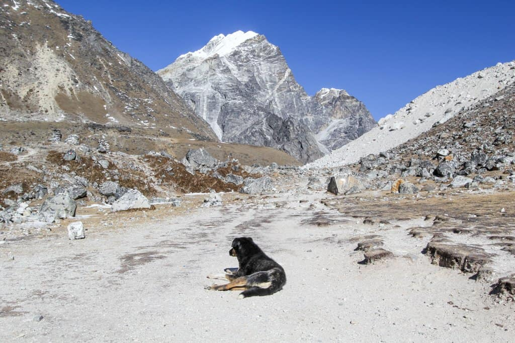 Dog Lobuche Pass
