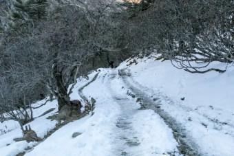 Snowy Trail Himalaya
