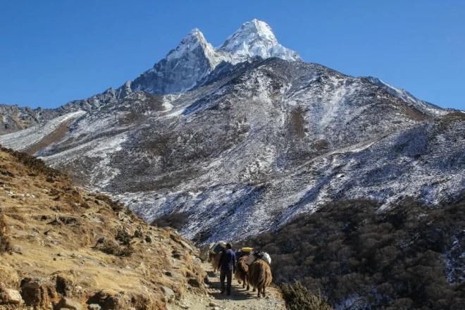 Yaks Mountains Himalaya