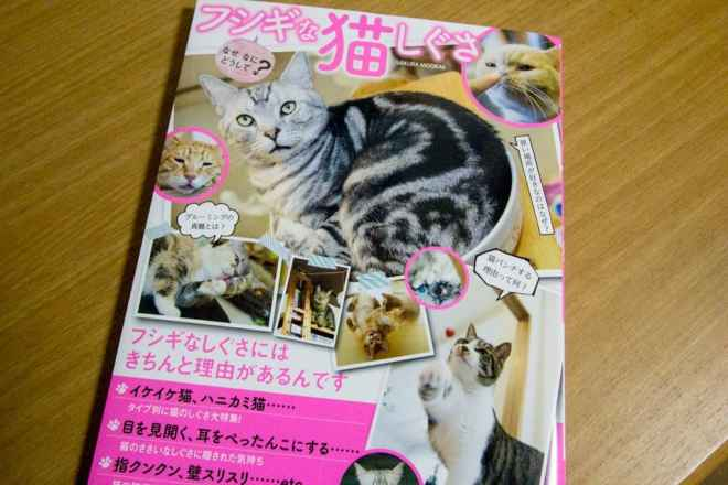 Cat Magazine Konbini 1