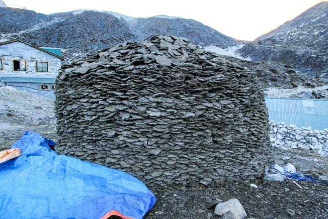 Everest Base Camp Trek Cow Poop