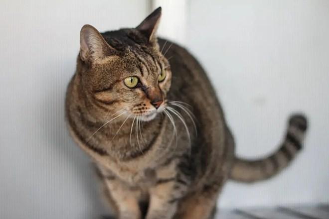 Kumamoto Cat 1