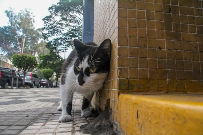 São Paulo Cat 1