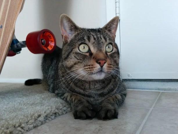 San Diego Cat 1