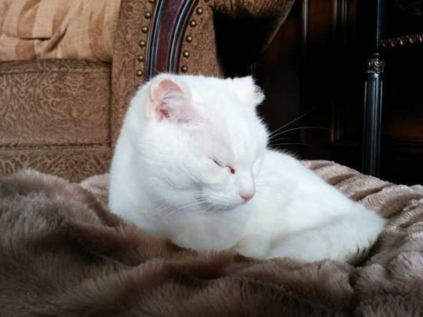 Thousand Oaks Cat 1