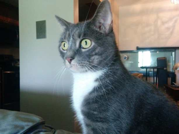 Ypsilanti Cat 1
