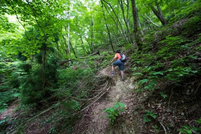 Mt Bunagatake Trail Climbing