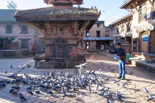 Kathmandu Changu Narayan Pigeons