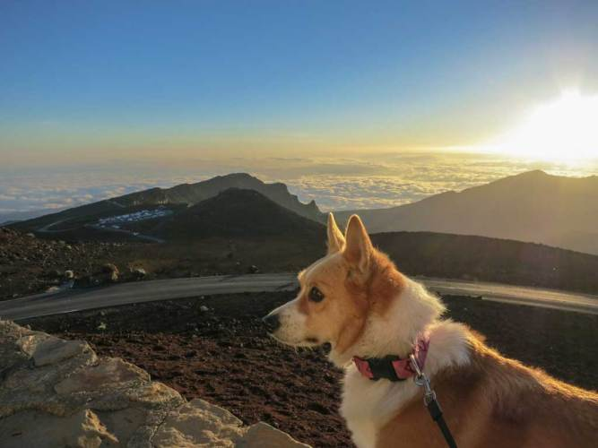 USA-Maui-Haleakala-Dog