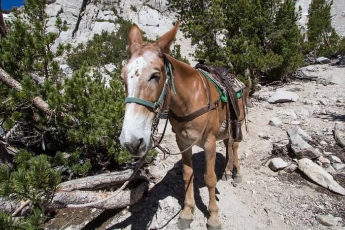 USA Sierra Horse