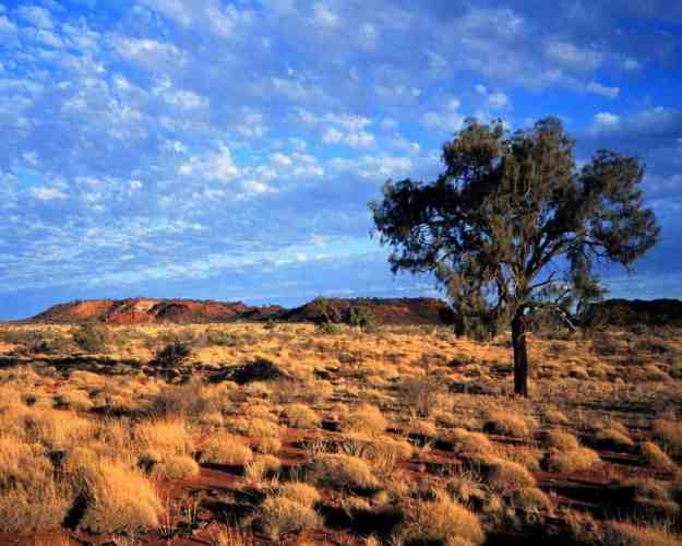 Australian-Outback-Landscape