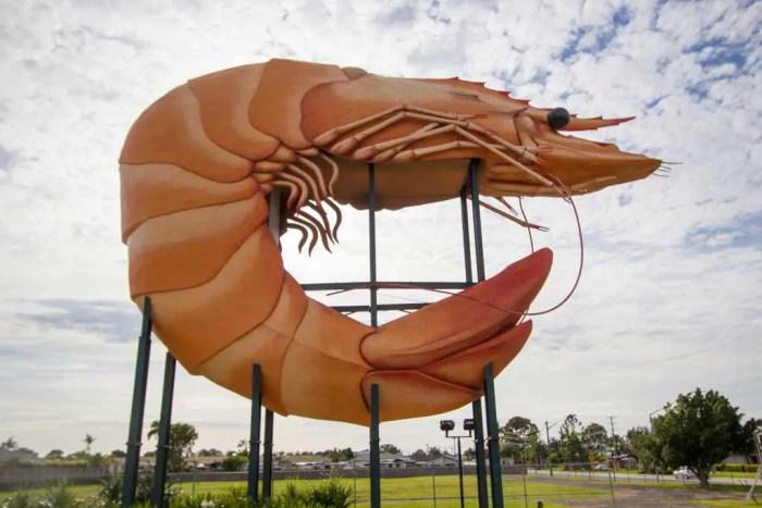 Australia-Ballina-Giant-Prawn
