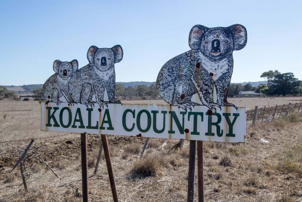 Australia-Bike-Tour-Koala-Country
