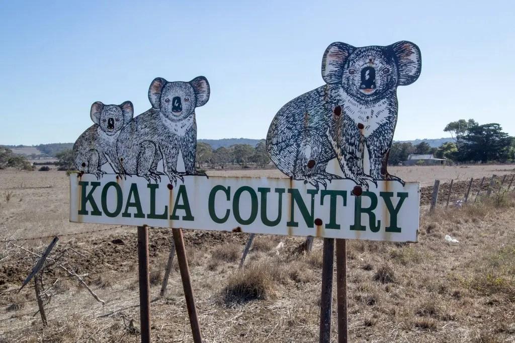 Australia-Bike-Tour-Koala-Country