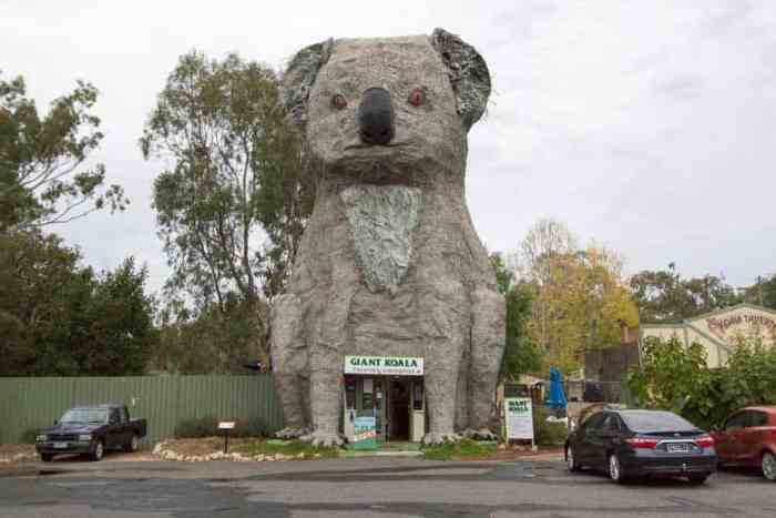 Australia-Giant-Koala