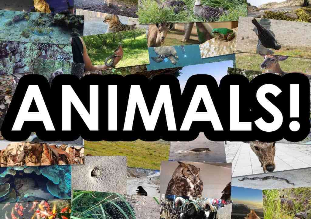 Animal-Photos-Featured