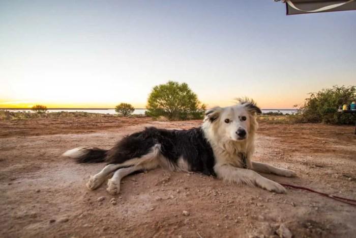 Australia-Outback-Dog