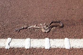 Australia-Outback-Snake