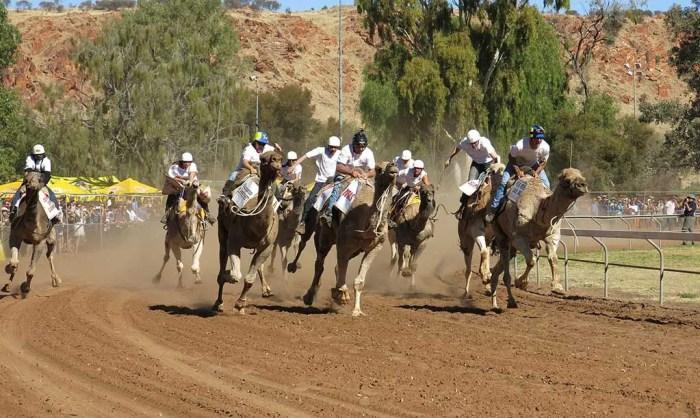 alice-springs-camel-race