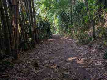 pedra-bonita-trail-4