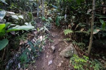 brazil-rio-de-janeiro-pedra-da-gavea-alt-trail-3