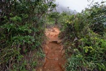 brazil-rio-de-janeiro-pedra-da-gavea-trail-3