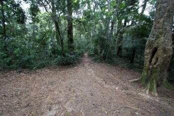 brazil-rio-de-janeiro-pedra-da-gavea-trail-6