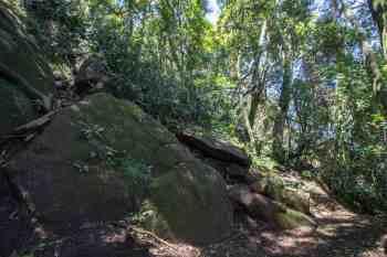 brazil-rio-de-janeiro-pedra-da-gavea-trail-turn
