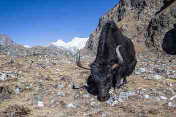 Nepal-Three-Passes-Trek-Day-11-2