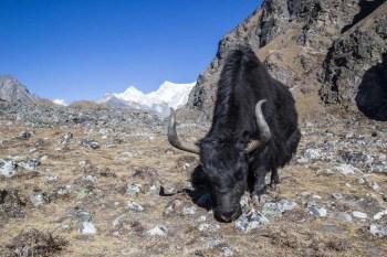 Nepal-Three-Passes-Trek-Day-11-2