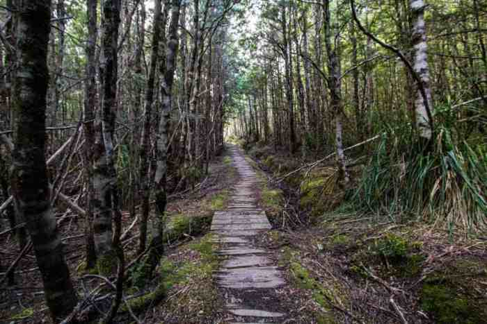 Tasmania-Overland-Track-Old-Track