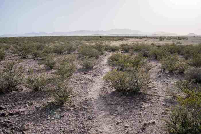 CDT-New-Mexico-Terminus-Trail