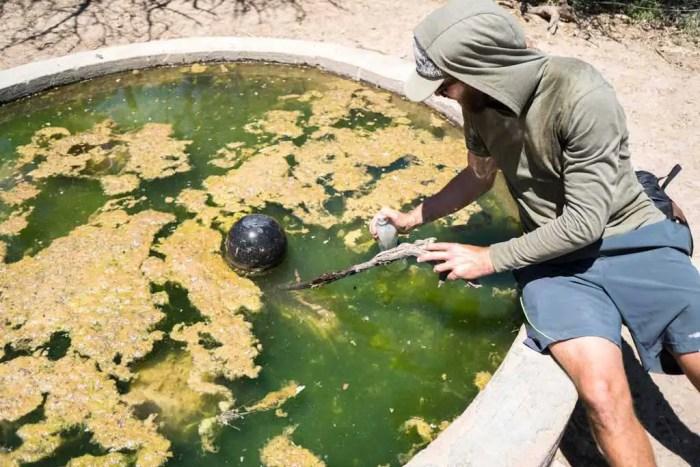 CDT-New-Mexico-Scummy-Water-Source