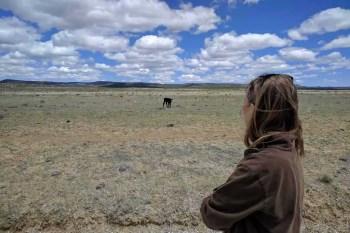 CDT-New-Mexico-Desert-Calf