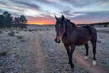 CDT-New-Mexico-Horse-Sunset